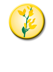 nimble_asset_buton_baptisia