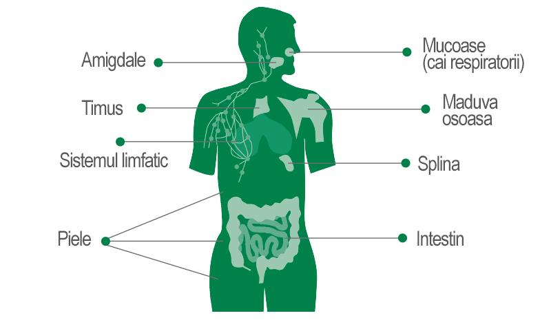Organele sistemului imunitar